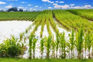 osiguranje useva i plodova