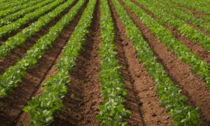 Osiguranje poljoprivrede – da prihod ne zavisi od neba